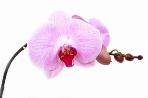 La routine delle orchidee